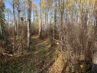 Photo 13: Twp. 545 & Rg. Rd. 275: Rural Sturgeon County Rural Land/Vacant Lot for sale : MLS®# E4175911