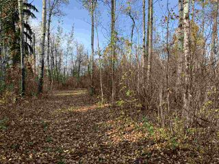 Photo 14: Twp. 545 & Rg. Rd. 275: Rural Sturgeon County Rural Land/Vacant Lot for sale : MLS®# E4175911