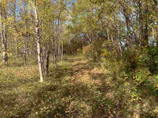 Photo 7: Twp. 545 & Rg. Rd. 275: Rural Sturgeon County Rural Land/Vacant Lot for sale : MLS®# E4175911