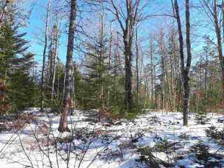 Photo 9: LOT Stronach Mountain Road in Forest Glade: 400-Annapolis County Vacant Land for sale (Annapolis Valley)  : MLS®# 201924165