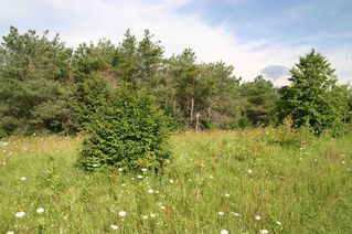 Photo 17: Lot 2 Con 3 in Mulmur: Rural Mulmur Property for sale : MLS®# X4807127