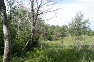 Photo 14: Lot 2 Con 3 in Mulmur: Rural Mulmur Property for sale : MLS®# X4807127