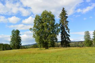 Photo 20: 1334 POPLAR PARK Road: Hazelton House for sale (Smithers And Area (Zone 54))  : MLS®# R2400834