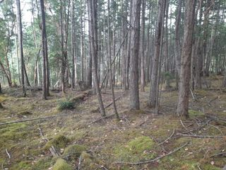 Photo 4: 141 COHO Blvd in : Isl Mudge Island Land for sale (Islands)  : MLS®# 855986