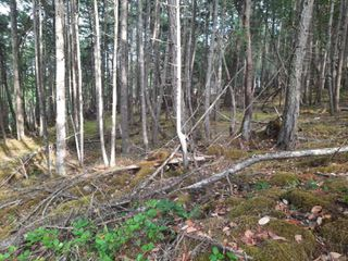 Photo 11: 141 COHO Blvd in : Isl Mudge Island Land for sale (Islands)  : MLS®# 855986