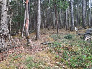 Photo 9: 141 COHO Blvd in : Isl Mudge Island Land for sale (Islands)  : MLS®# 855986
