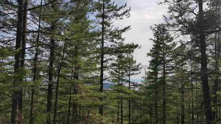 "Photo 8: Lot 49 FLINT Road: Keats Island Land for sale in ""10 Acres"" (Sunshine Coast)  : MLS®# R2460996"