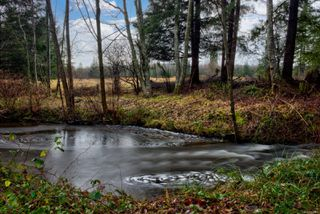 Photo 8: 6575 Poulton Rd in : CV Merville Black Creek House for sale (Comox Valley)  : MLS®# 862861