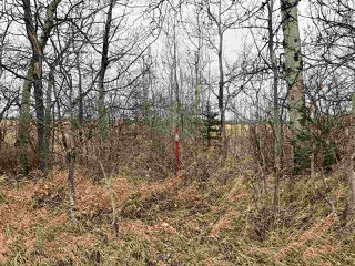 Photo 12: Twp Rd 583 Rge Rd 271: Rural Westlock County Rural Land/Vacant Lot for sale : MLS®# E4218422
