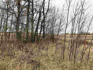 Photo 9: Twp Rd 583 Rge Rd 271: Rural Westlock County Rural Land/Vacant Lot for sale : MLS®# E4218422