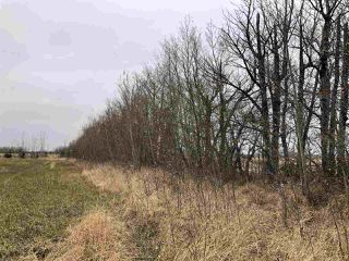 Photo 7: Twp Rd 583 Rge Rd 271: Rural Westlock County Rural Land/Vacant Lot for sale : MLS®# E4218422