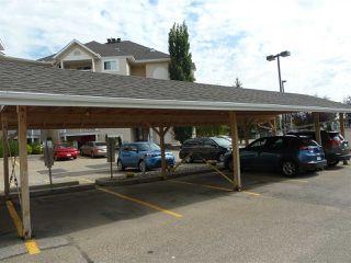 Photo 17: 309 11620 9A Avenue in Edmonton: Zone 16 Condo for sale : MLS®# E4172434