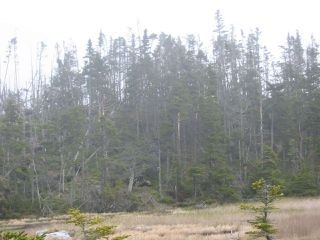 Photo 17: Lot 03-1A Highway 7 in Marie Joseph: 303-Guysborough County Vacant Land for sale (Highland Region)  : MLS®# 201917799