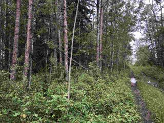 Photo 13: 624 RGE RD 251: Rural Athabasca County Rural Land/Vacant Lot for sale : MLS®# E4202176