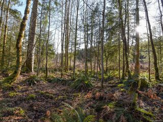 Photo 40: 3699 Burns Rd in COURTENAY: CV Courtenay West House for sale (Comox Valley)  : MLS®# 834832