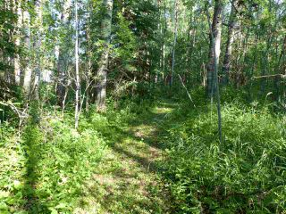 Photo 9: Hwy 771 94 453041 Highway: Rural Wetaskiwin County House for sale : MLS®# E4167447