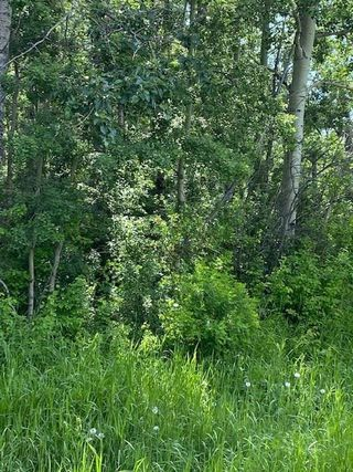Photo 5: 55503 RGE RD 62: Rural Lac Ste. Anne County Rural Land/Vacant Lot for sale : MLS®# E4202378