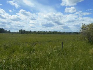 Photo 12: Twp. 474 & Rng. Rd. 74: Rural Brazeau County Rural Land/Vacant Lot for sale : MLS®# E4189527