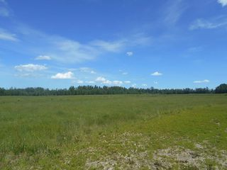 Photo 11: Twp. 474 & Rng. Rd. 74: Rural Brazeau County Rural Land/Vacant Lot for sale : MLS®# E4189527