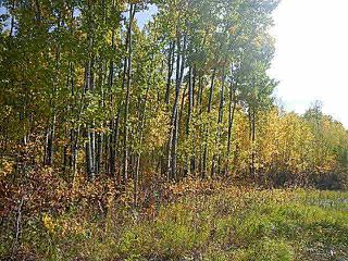 Main Photo: Twp 543 @Rg Rd 194 Lamont County: Rural Lamont County Rural Land/Vacant Lot for sale : MLS®# E4206228