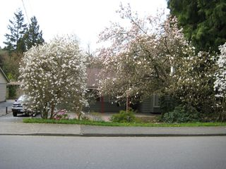 Photo 12: 5680 Marine drive in West Vancouver: Eagle Harbour Multifamily  : MLS®# V695669
