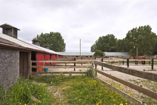 Photo 10: 2990 57B STREET in Delta: Agriculture for sale : MLS®# C8023503