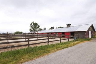 Photo 11: 2990 57B STREET in Delta: Agriculture for sale : MLS®# C8023503