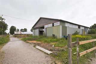 Photo 12: 2990 57B STREET in Delta: Agriculture for sale : MLS®# C8023503