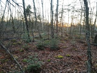 Photo 8: LOT MCNALLY Road in Victoria Harbour: 404-Kings County Vacant Land for sale (Annapolis Valley)  : MLS®# 201923444