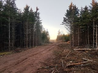 Photo 3: LOT MCNALLY Road in Victoria Harbour: 404-Kings County Vacant Land for sale (Annapolis Valley)  : MLS®# 201923444