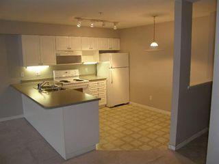 Photo 3: 408 22230 NORTH AVENUE in Maple Ridge: Home for sale : MLS®# V935346