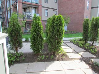 """Photo 12: #275 20170 FRASER HWY in LANGLEY: Langley City Townhouse for rent in """"PADDINGTON STATION"""" (Langley)"""