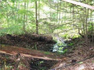 Photo 4: 1550 ADAMS Road: Bowen Island Land for sale : MLS®# V806312