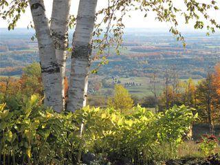 Photo 12: 798475 3rd Line in Mulmur: Rural Mulmur House (Bungalow) for sale : MLS®# X4806669