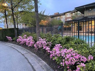 "Photo 22: 2301 5113 GARDEN CITY Road in Richmond: Brighouse Condo for sale in ""Lions Park"" : MLS®# R2456048"
