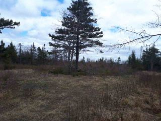 Photo 4: 252 Whitehead Road in Harrietsfield: 9-Harrietsfield, Sambr And Halibut Bay Vacant Land for sale (Halifax-Dartmouth)  : MLS®# 202025766