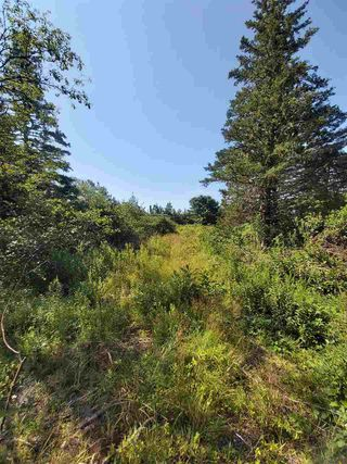 Photo 2: Lot Sandy Point Road in Sandy Point: 407-Shelburne County Vacant Land for sale (South Shore)  : MLS®# 202016060