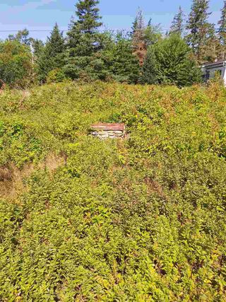 Photo 5: Lot Sandy Point Road in Sandy Point: 407-Shelburne County Vacant Land for sale (South Shore)  : MLS®# 202016060