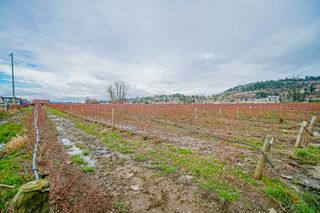 Photo 40: 35826 SOUTH PARALLEL Road in Abbotsford: Sumas Prairie Agri-Business for sale : MLS®# C8035413