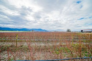 Photo 39: 35826 SOUTH PARALLEL Road in Abbotsford: Sumas Prairie Agri-Business for sale : MLS®# C8035413