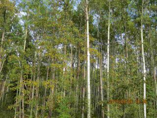 Main Photo: East Bank Road Range Road 135A: Rural Yellowhead Rural Land/Vacant Lot for sale : MLS®# E4174239
