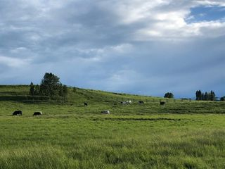 Photo 49: 30117 RANGE ROAD 22: Rural Mountain View County Detached for sale : MLS®# A1051168