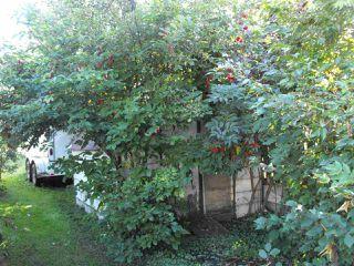 Photo 13: 5203 49 Avenue: Elk Point House for sale : MLS®# E4172752