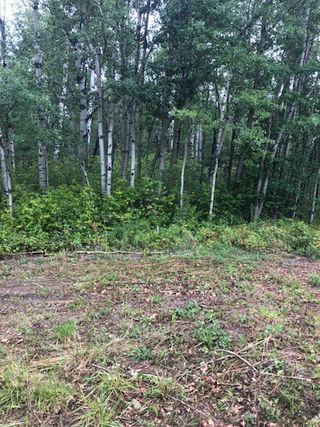 Photo 4: Twp 473A RR 12: Rural Leduc County Rural Land/Vacant Lot for sale : MLS®# E4171961