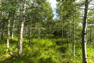 Photo 40: Pigeon Lake AB: Rural Wetaskiwin County Rural Land/Vacant Lot for sale : MLS®# E4195906