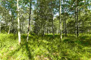 Photo 45: Pigeon Lake AB: Rural Wetaskiwin County Rural Land/Vacant Lot for sale : MLS®# E4195906