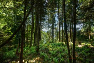 Main Photo: 350 MOUNTAIN Drive: Lions Bay Land for sale (West Vancouver)  : MLS®# R2459456