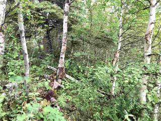 Photo 20: 624 Rge Rd 251: Rural Athabasca County Rural Land/Vacant Lot for sale : MLS®# E4202177