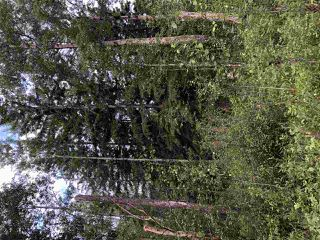 Photo 22: 624 Rge Rd 251: Rural Athabasca County Rural Land/Vacant Lot for sale : MLS®# E4202177