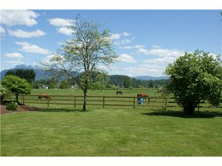Photo 8: 15146 HARRIS Road in Pitt Meadows: North Meadows House for sale : MLS®# V852807